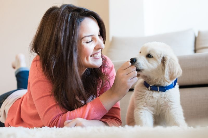 How to Puppy-Proof Your Home