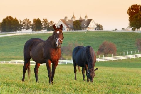 3 Things to Consider When Buying a Horse
