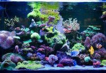 Top Pet Ideas for Aquarium Tanks