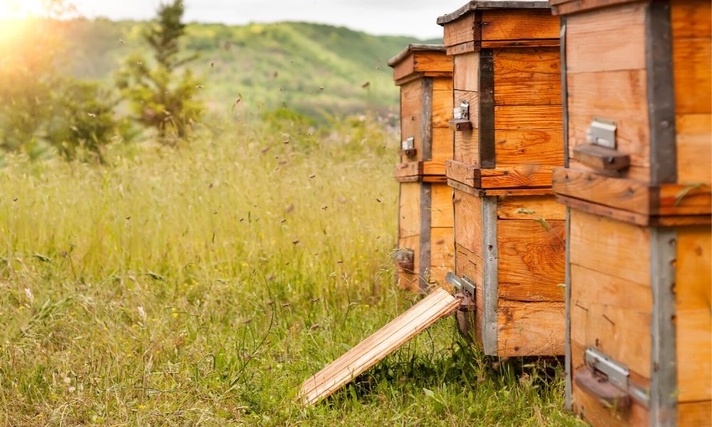 3 Tips for Starting a Successful Apiary