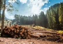 A Guide To Starting a Logging Company