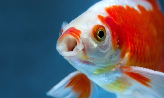 Best Practices for Keeping Your Fish Alive