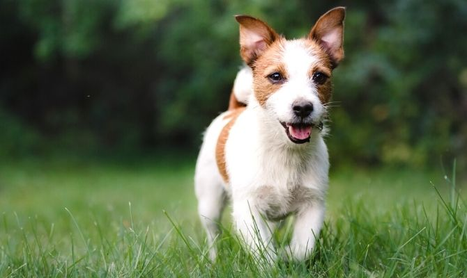 Keeping Fido Fit: Why Dogs Need Regular Exercise