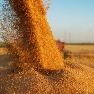 Essential Tips for Properly Storing Grain Long-Term