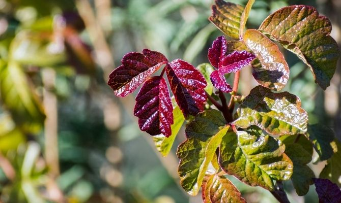 Pick Your Poison: Tips for Planting a Poison Garden