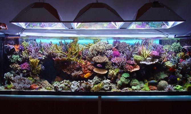 Tank Health: Debunking Common Saltwater Aquarium Myths