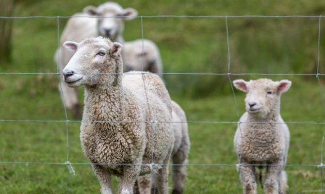 Reasons Fencing Is so Effective With Livestock