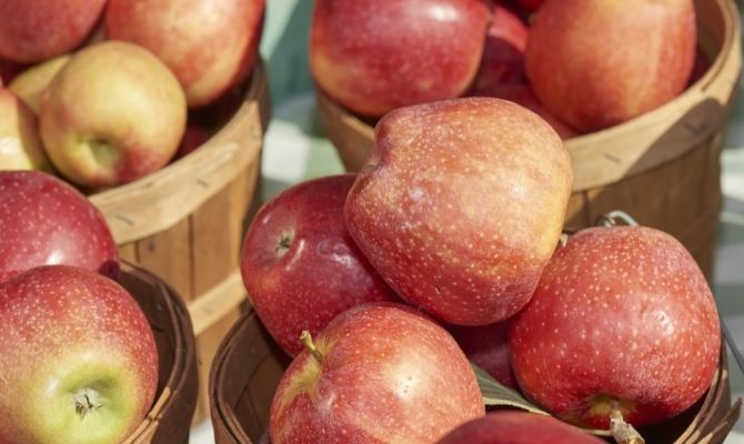 What to Do Before Becoming a Vendor at the Farmer's Market